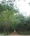 Cần bán gấp lô đất cao su và vườn cây ăn trái